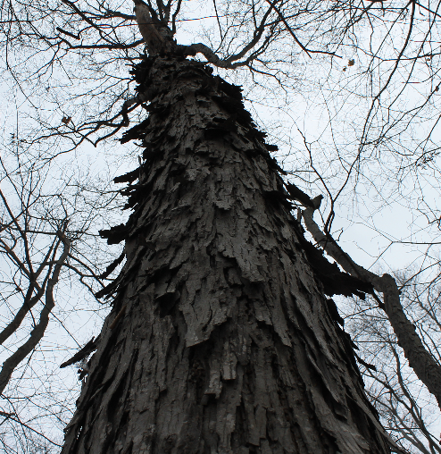 d3.js Dynamic, Collapsible Tree